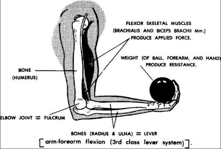 Fascia Bones And Muscles Beinghuman