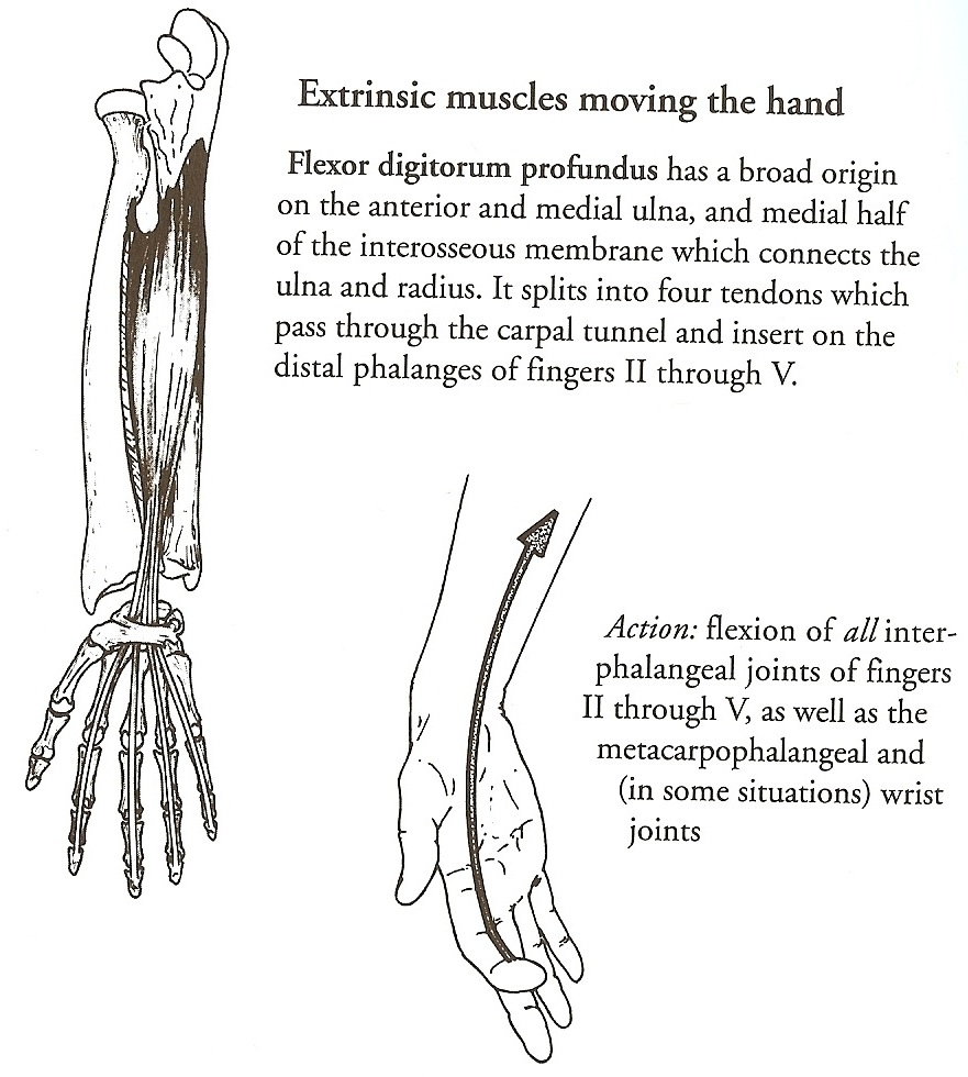 Fascia Bones And Muscles Beinghuman